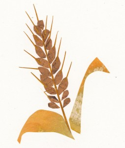 ANCIENT GRAINS: Image by Bonnie Acker (c) 2014